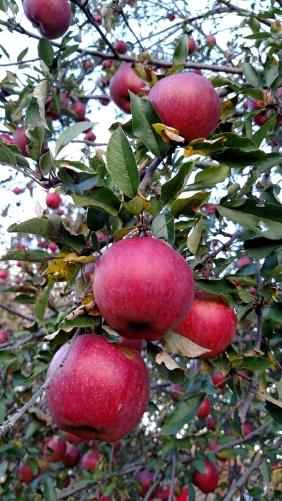 Close apples